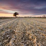 Solitary tree in golden sunrise Stock Photos