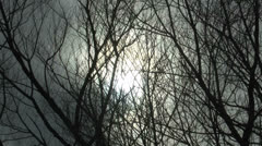 Spooky Tree Branches Stock Footage