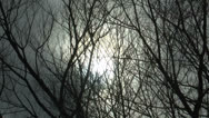 Stock Video Footage of Spooky Tree Branches