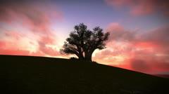 Tree on the mountain Stock Footage