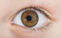 Human eye brown color Stock Photos