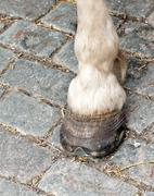 Foot and hoof white horse Stock Photos