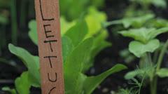 Home organic garden plot - stock footage