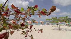 Sun loungers with parasols on the sandy beach of Grande Anse, Grenada Stock Footage