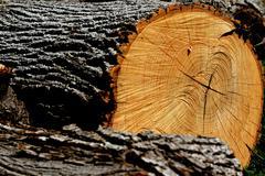 tree log. - stock photo