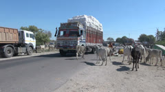 India Rajasthan giant lorry avoids cattle in the road  Stock Footage