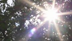 Tree Lens Flare Motion Back Stock Footage