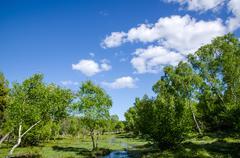 small creek - stock photo