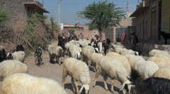 India Rajasthan Luni sheep and goats followed by shepherds 12 Stock Footage