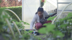 Woman teaching children planting plants in garden Stock Footage