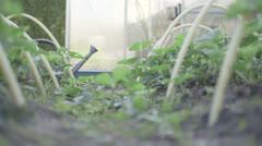 Woman watering plants Stock Footage