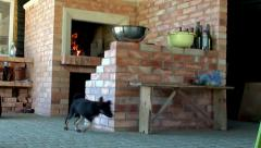 Puppy dog in the kitchen with a fireplace. Stock Footage