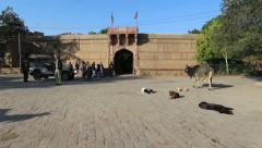 Luni Fort Chanwa, Cows lie in a dirt street while people stand around a jeep Stock Footage