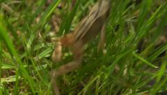 Slow motion: Jumping frog Stock Footage