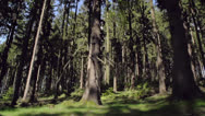 Tracking past a forest Stock Footage