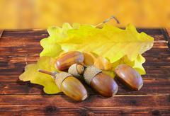 Acorns in autumn setting Stock Photos