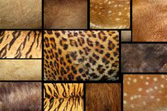 Collection of textured - animal fur Stock Photos
