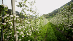 Apple Trees Stock Footage