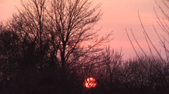 Silhouetted Bare Branches and Low Setting Sun - stock footage