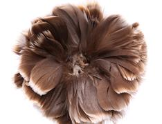 end feather duster close-up - stock photo
