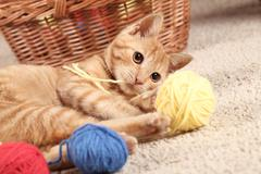 Kitty and wool balls Stock Photos