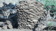 India Rajasthan Luni arranged cow dung stack Stock Footage
