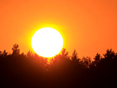 The sun sinks behind the trees. Glare-free from insects. Close-up. 4x3 Stock Footage
