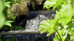 Small waterfall between plants and rocks. Stock Footage