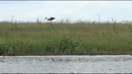 Stork on the walk Stock Footage