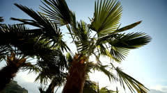 Palm tree with lens flare - stock footage