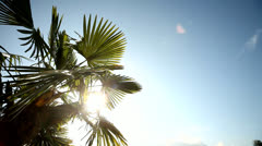 Palm tree with lens flare Stock Footage