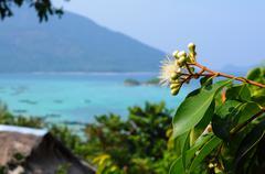 black plum's flower [syzygium] - stock photo
