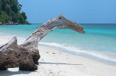 natural log on clear blue sea - stock photo