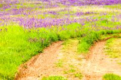 land with green grass and purple flowers - stock photo