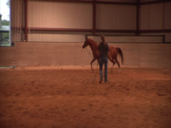 Horse Being Walked in an Arena A -alt Stock Footage