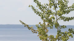 poplar and sea open spaces in the summer afternoon - stock footage