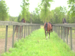 Three Horses Seperated By a Fence 4 Stock Footage