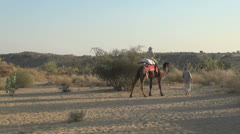 India Rajasthan Manvar camel carries man with fedora Stock Footage