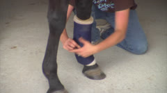 Person Tending to an Injured Horse Leg - stock footage