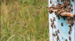 Flying bees Stock Footage