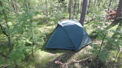 Tent in the European wood, among big trees, a camping in the summer Stock Footage
