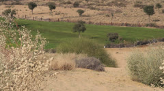 India Rajasthan Manvar irrigated plot in Thar desert landscape  Stock Footage