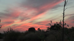 India Rajasthan Thar desert sunset red clouds outline plants 2 Stock Footage