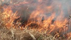 Brush On Fire Closeup Flames W/ Natural Sound (Crackling) 1 Stock Footage