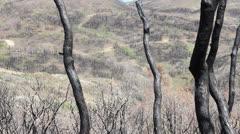 Burnt wilderness Stock Footage