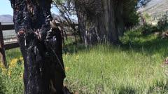 Burnt tree - stock footage