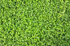 verdant plant in garden - stock photo
