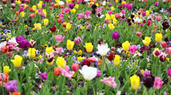 Many colorful flowers in a park Stock Footage