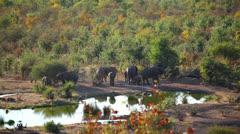 Elephant Waterhole 10 HD - stock footage