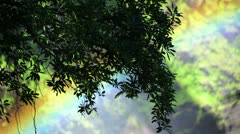Stock Video Footage of Rainbow Tree 01 HD